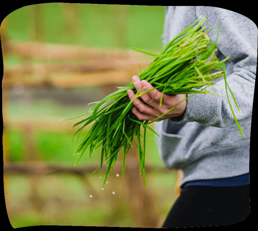 安来市haloで安来で作った野菜を、安来で食べる